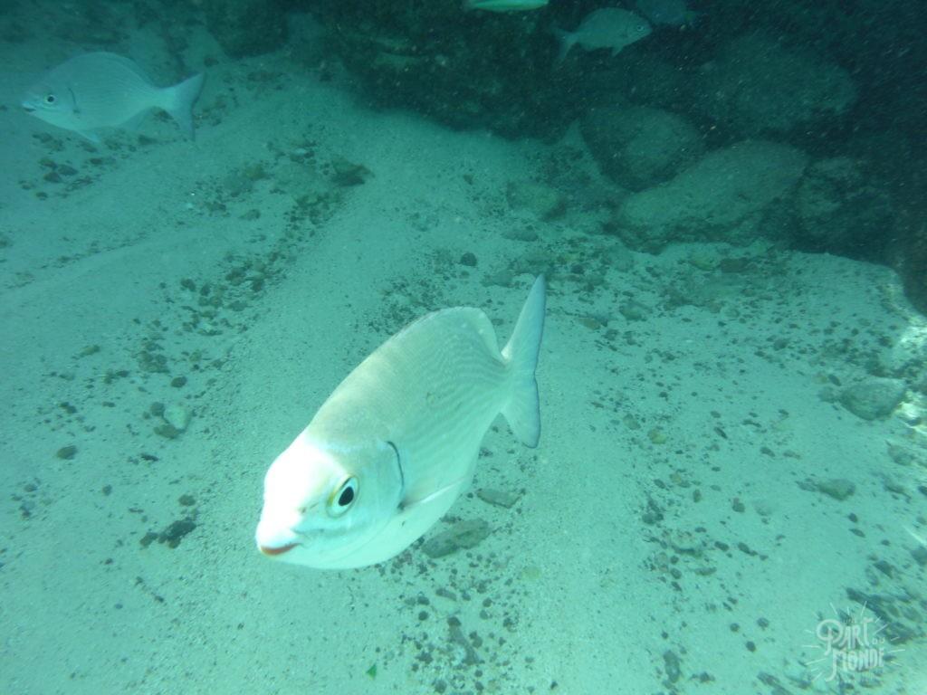 poisson snorkeling providencia