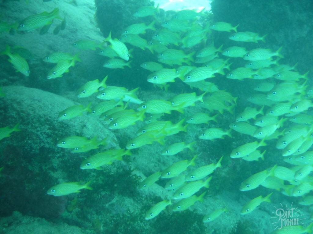snorkeling 2 providencia