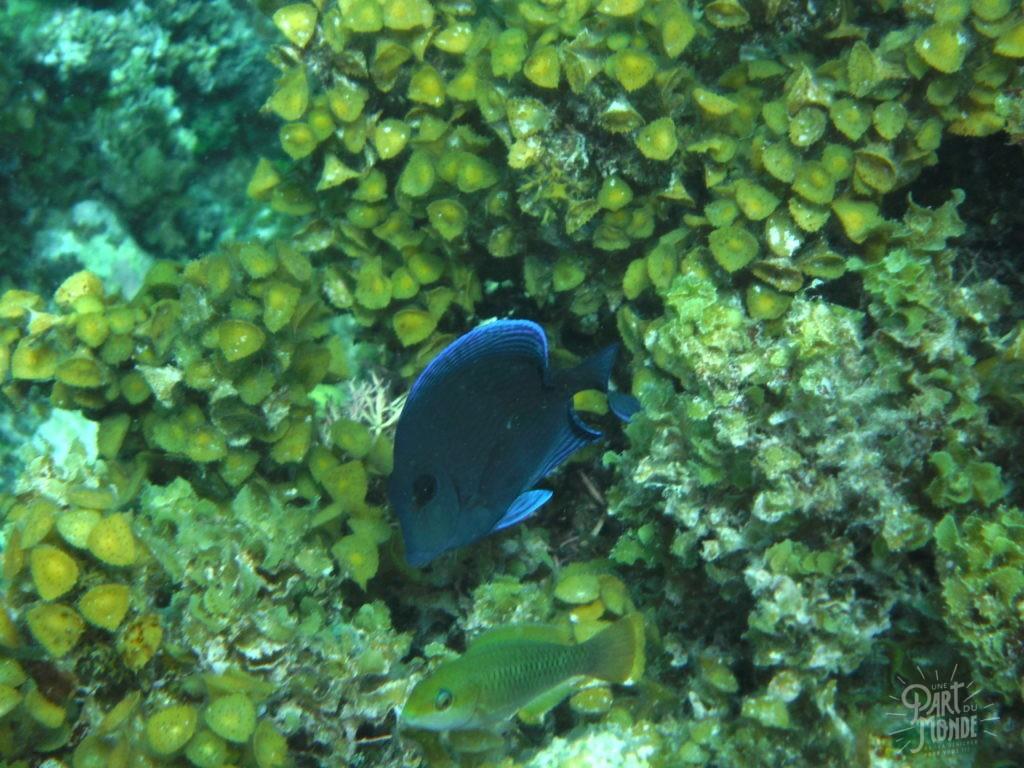 snorkeling providencia