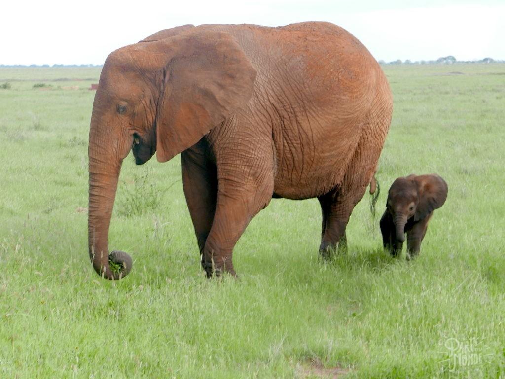 safari au kenya éléphant tsavo