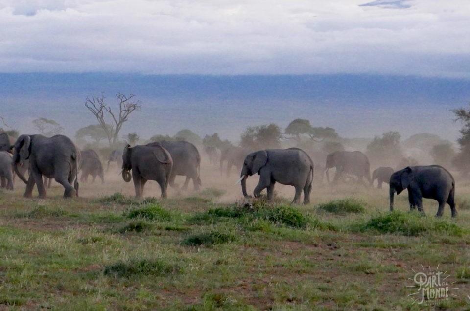 Safari au Kenya : Mon guide pour vivre un safari de rêve (et promo sur votre prochain safari!)