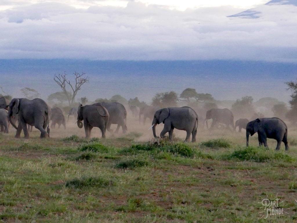 safari au kenya harde elephant amboseli