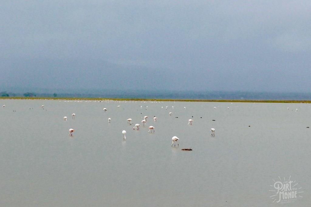 safari au kenya lac amboseli