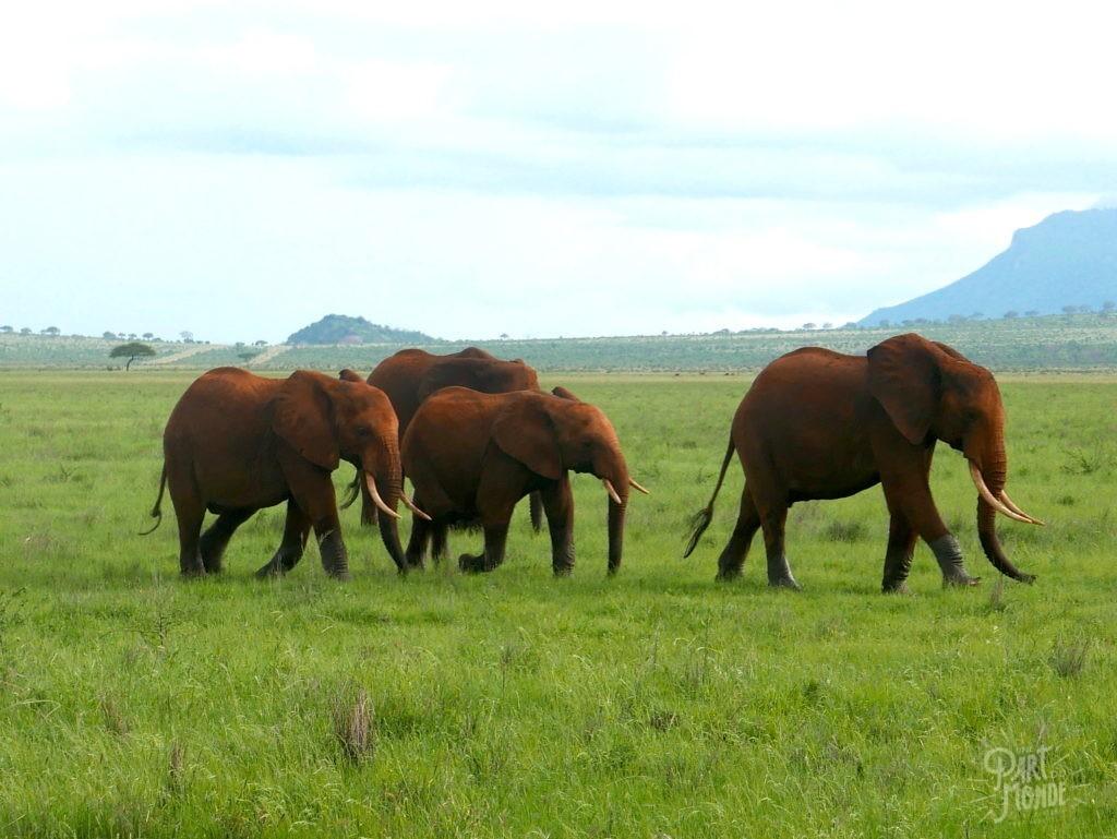 safari au kenya tsavo elephant rouge