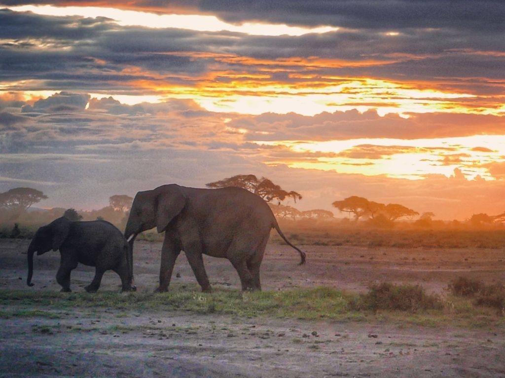 sunset elephant amboseli