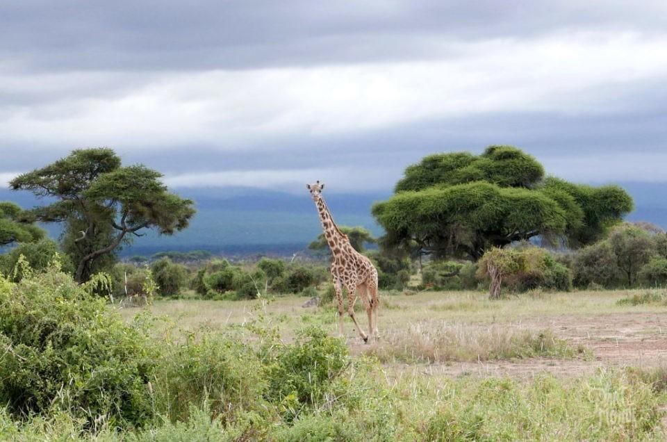 Amboseli-Kenya: Safari entre lacs, Kilimandjaro et immenses éléphants