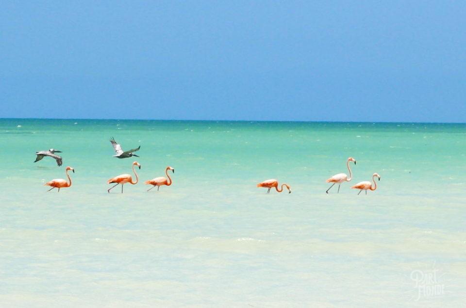 Holbox : le paradis sur terre au Mexique !