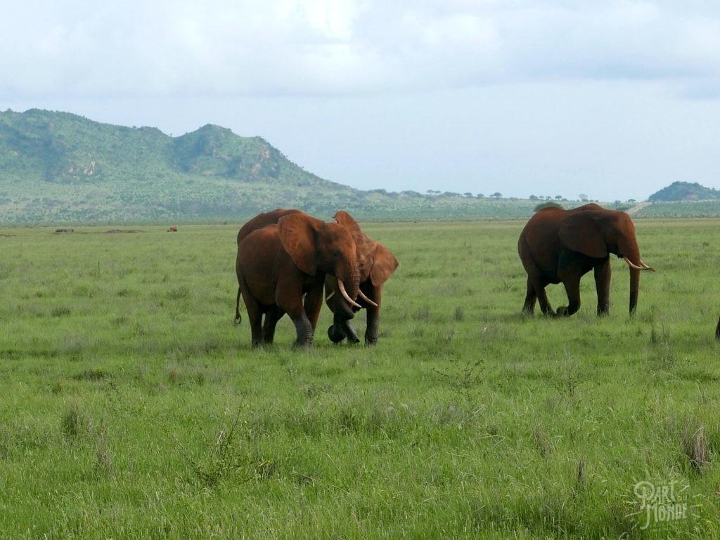 jeu éléphant tsavo safari