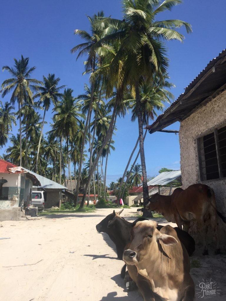 vache village paje