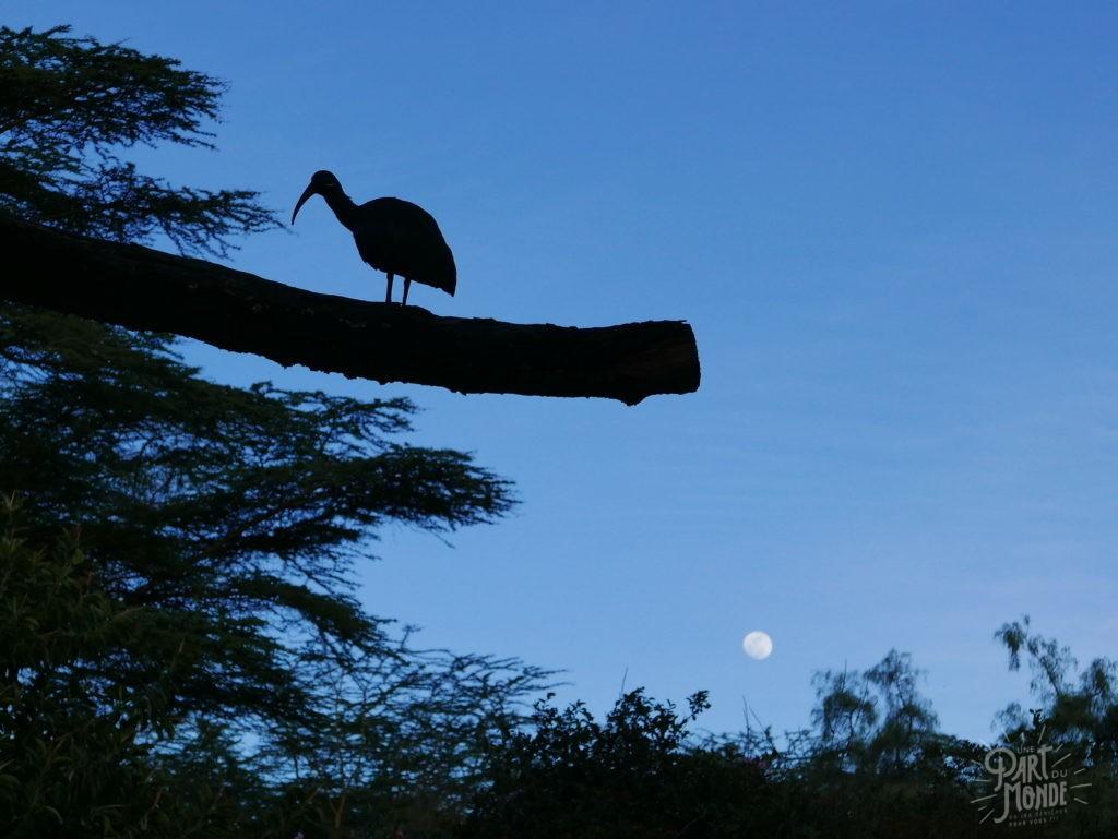 ibis lac naivasha