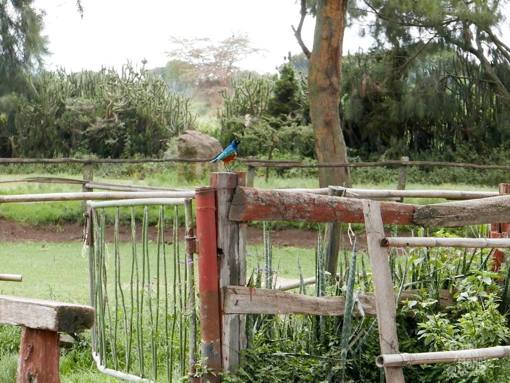oiseau naivasha