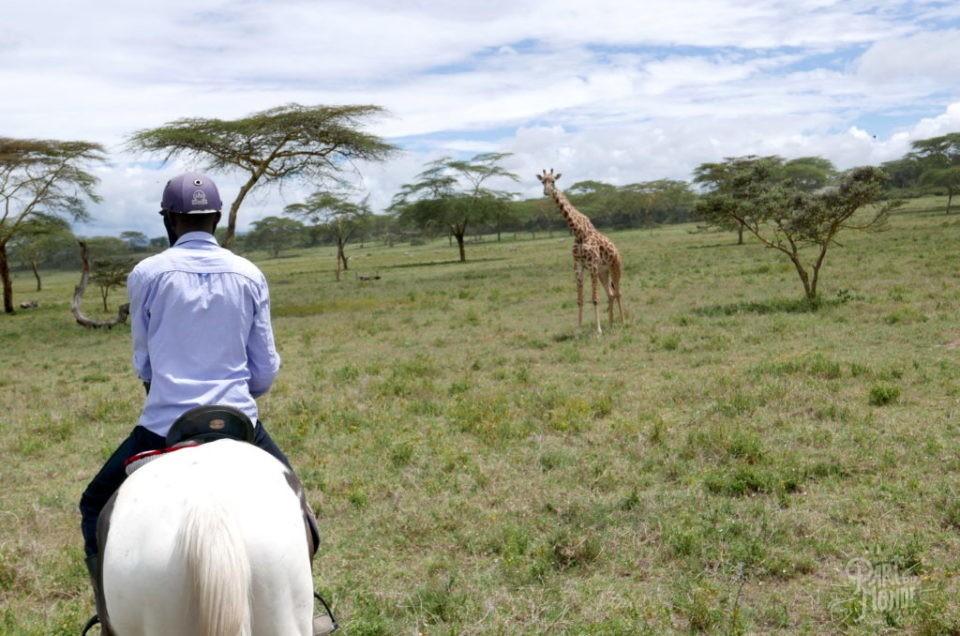 Kenya : Mon safari à cheval au Lac Naivasha