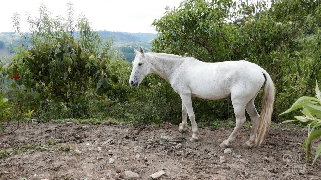 cheval parc salento