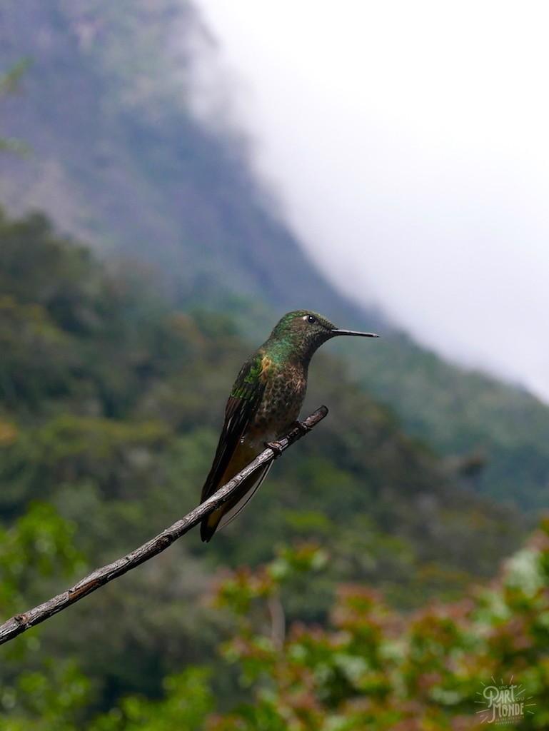 colibri 2 ferme cocora