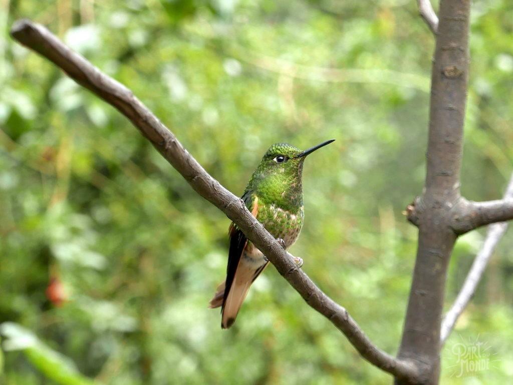 colibri salento vallée de cocora