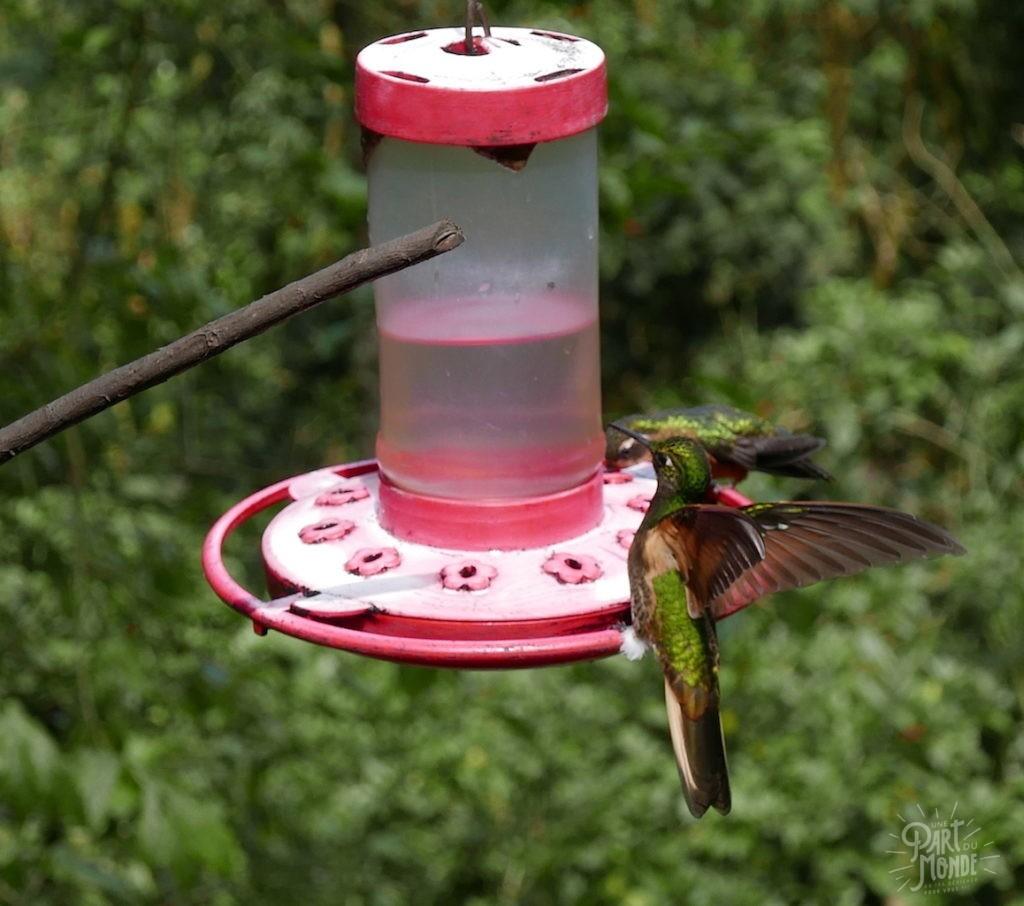 envol colibri salento