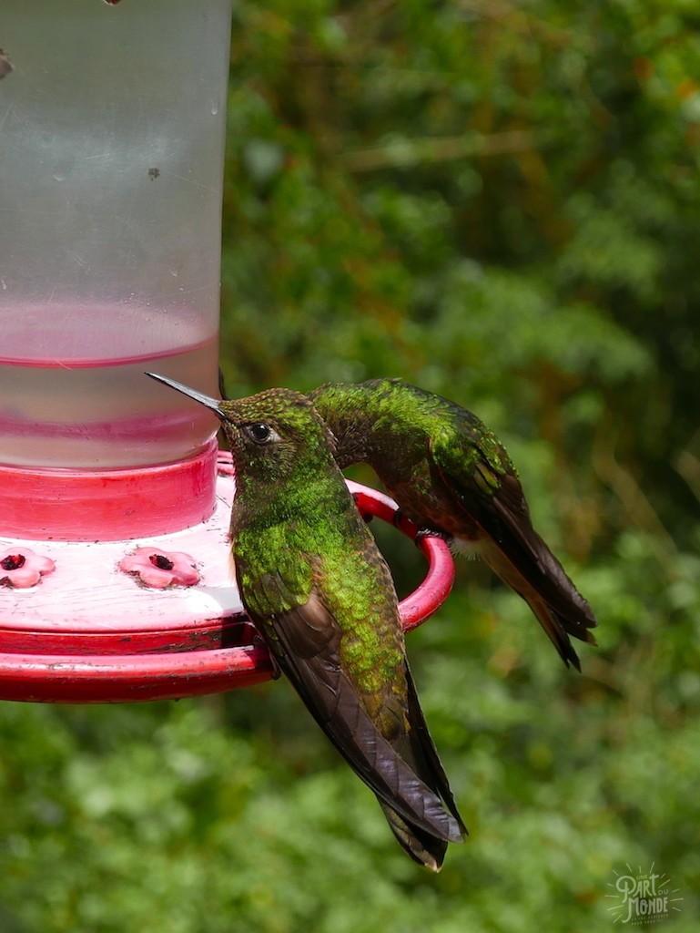 ferme colibri salento colombie