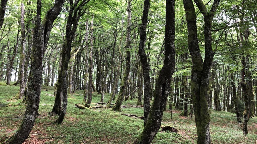 forêt rochers des hirschsteine