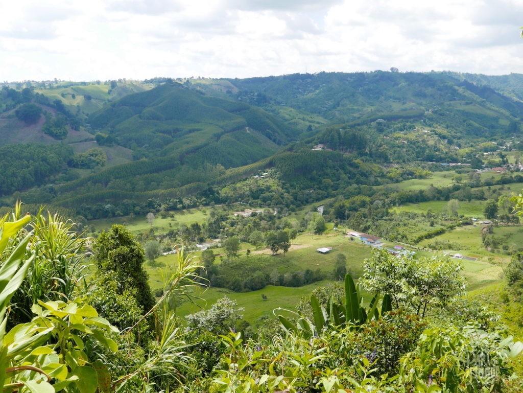 nature paysage salento