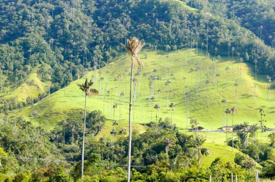 Salento et Vallée de Cocora : randonnées incroyables et village coloré