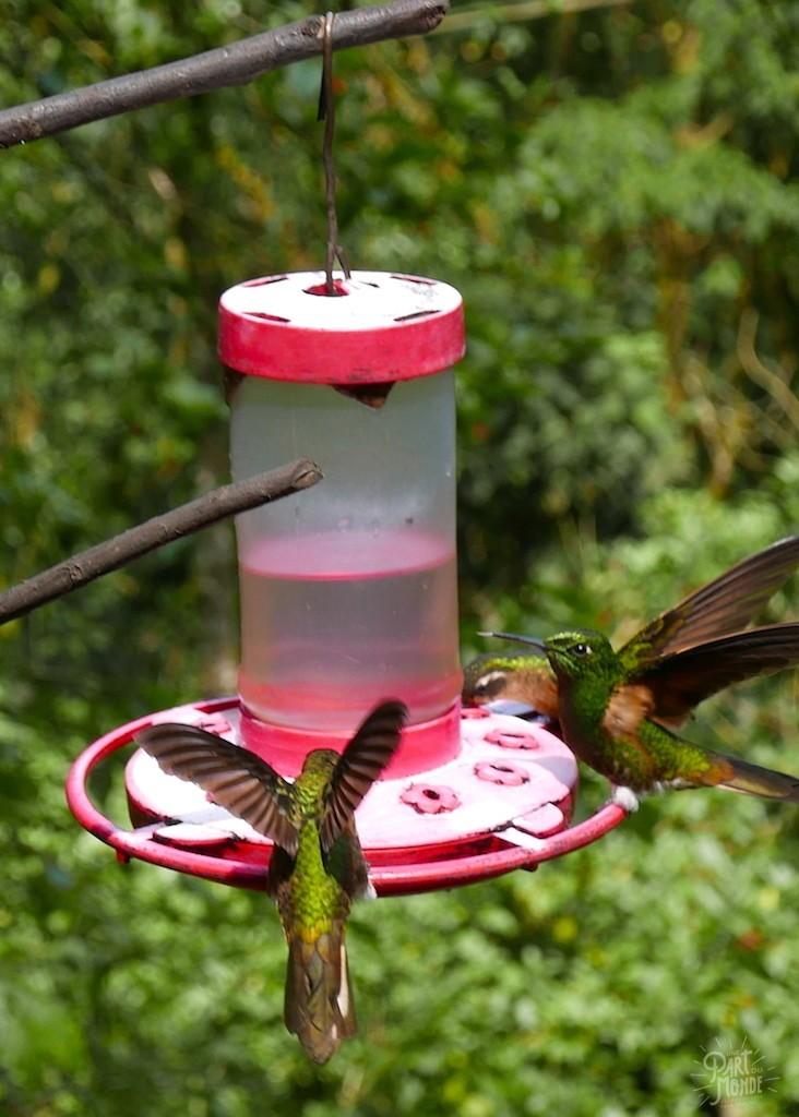 vols colibris vallée de cocora