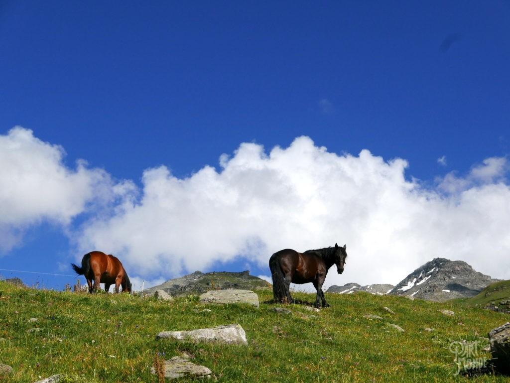 chevaux parc de la vanoise