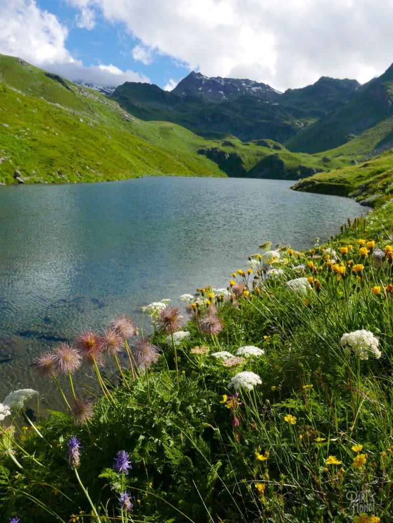 lac du lou parc de la vanoise fleurs