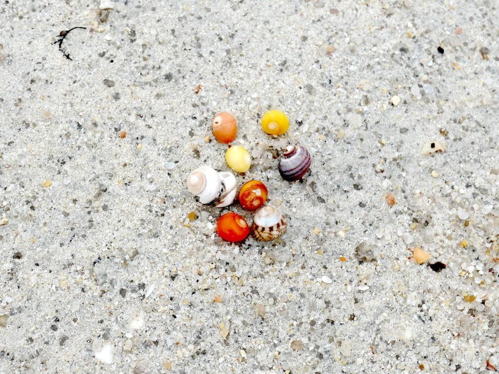 escargot plage